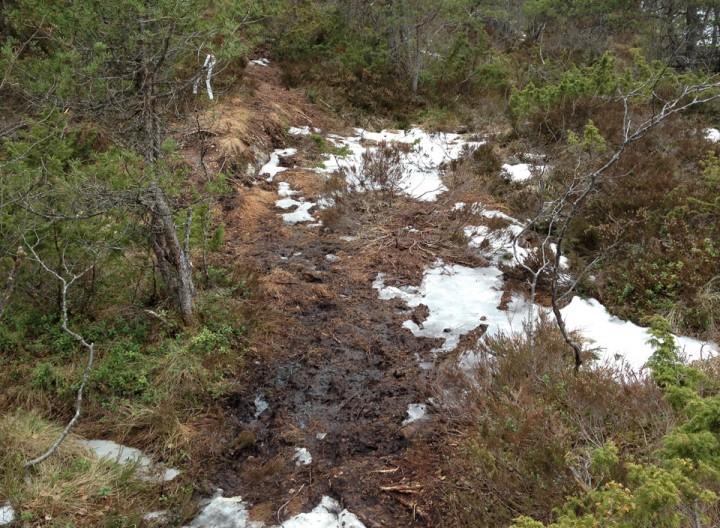 Stadig nye stier blir farbare når snøen smelter og telen går. Men litt gjørmete de første dagene.