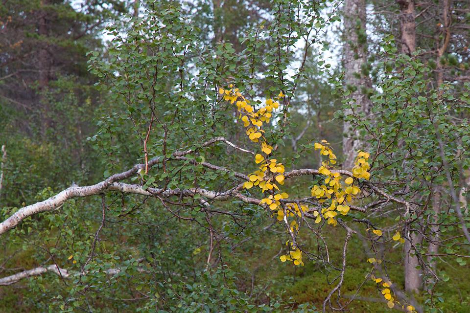 På vei tilbake til bilen får jeg en påminnelse om at høsten nærmer seg.