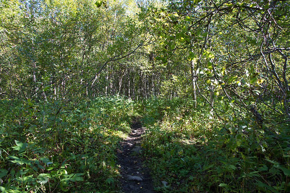Turen inn Rostadalen starter med noen kilometer med skog. Det tar ikke mange minuttene før trærne flyter sammen til en grønn verden og jeg forsvinner inn i egne tanker.