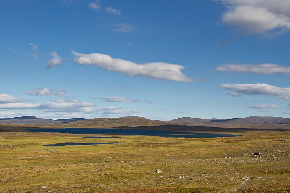 Inne ved Moskanjavri er terrenget flatt og lettgådd inn mot svenskegrensa. Jeg prøver fiskelykken i noen av de mange små og store vannene, men ender med 2 sluker i minus og ingen fangst. Stikkordet er laaaaanggrunt.