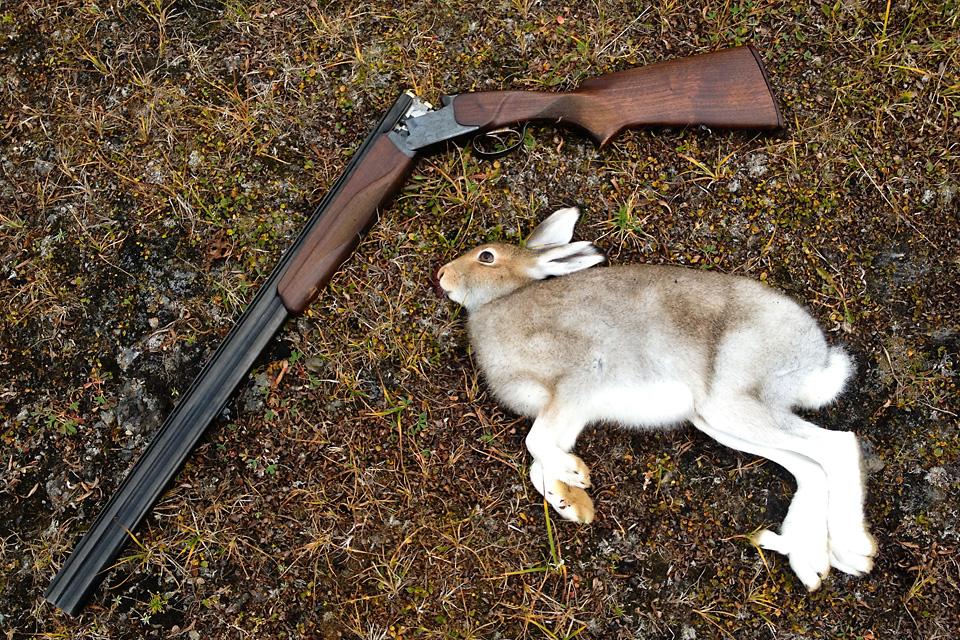 Et femsifret antall øyeblikkskudd i forsvaret sitter fortsatt i musklene. Et skudd, en hare.