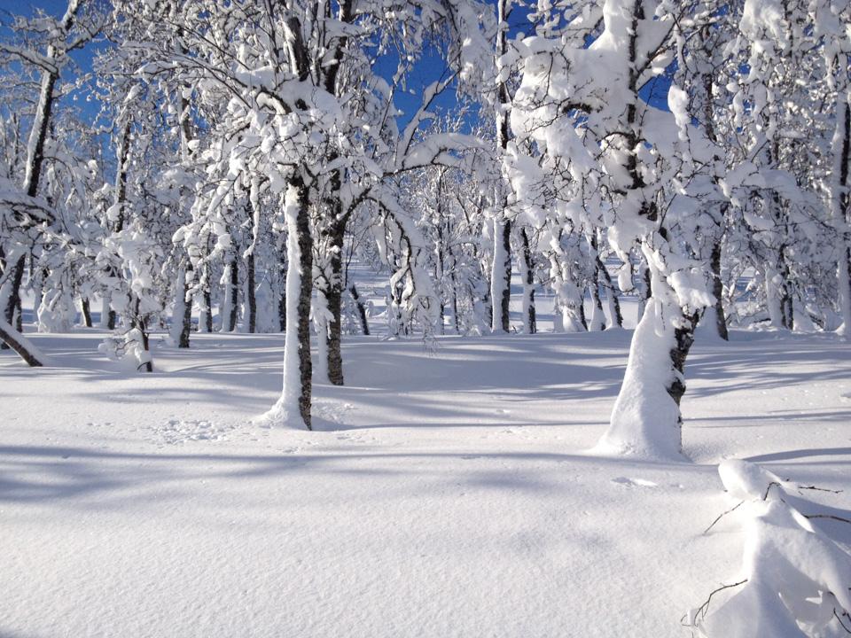 Enkelt å se hva som var den dominerende vindretningen mens det snødde - greit å ha i bakhodet når en velger rute.