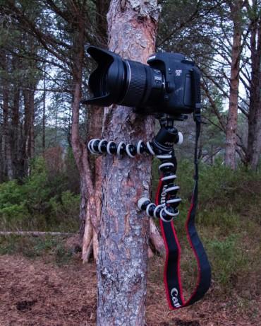 Med Gorillapodden rundt et tre får du kameraet opp i ønsket høyde.