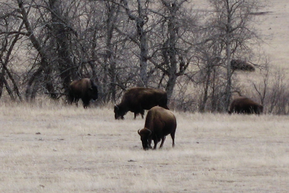 Med et tonn kjøtt bak hornene er det greit å holde en trygg avstand.