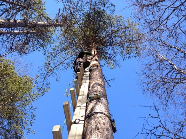 Cato gjør klart klatretreet for nye bestigninger