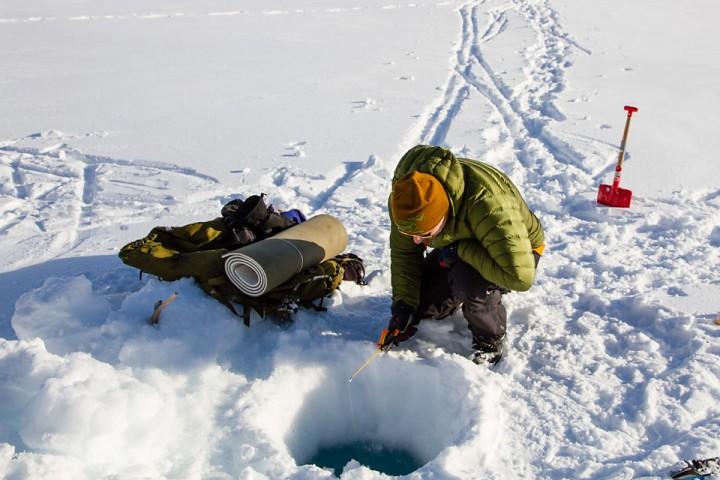 Håpefull fersking på isen.