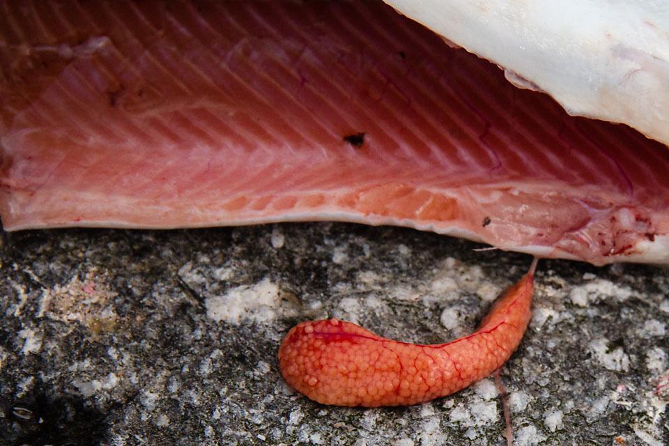 Rød og fin i fisken. Rogna ble fortært på stedet.