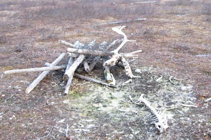 Det er ikke bare rovdyr som tar reinsdyr på Finnmarksvidda...