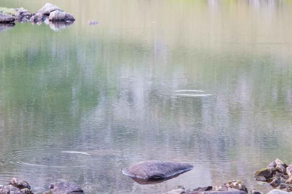 Fisken vaker villig og tar på alt som kastes i vannet.