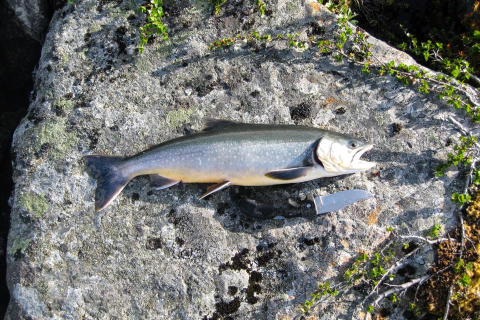 Ikke langt fra Dærtahytta sørget du for den perfekte porsjonsfisken. Dermed ble jeg en dag ekstra på tur.