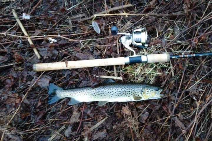 Sjøørreten biter også i januar, men en støing som denne er ikke matfisk. Slike blir satt forsiktig tilbake i vannet.
