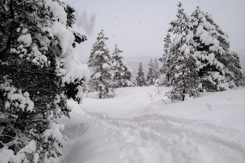 På hjemveien kikker jeg meg tilbake. I morgen er sporet borte. Vinteren er fin slik.