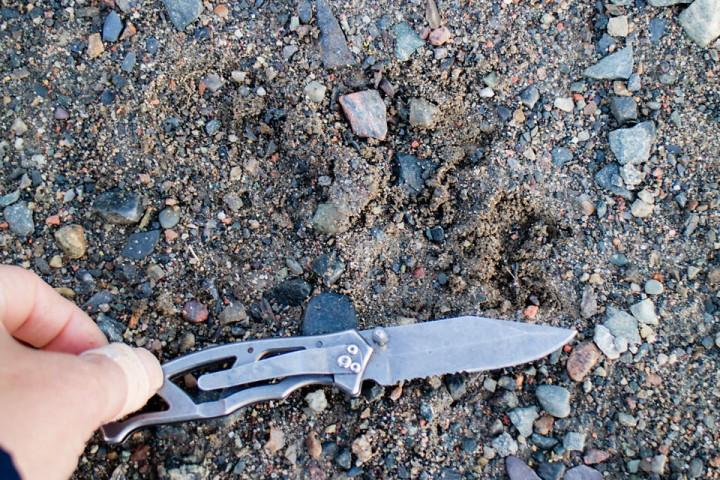 Kniven er 15 cm fra spiss til finger. Litt utydelig spor av det jeg tror er fremfot på 10-12 cm bredde og 15 cm lengde.