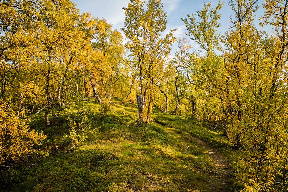 Høsten har for lengst inntatt fjellene i Indre-Troms.