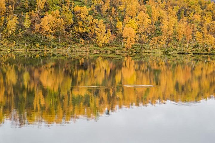 """Det er blitt høst ved mitt """"hemmelige"""" skogstjernet og fisken fortsetter å vake uten å bite på kroken. (Bildet er selvsagt et illustrasjonsbilde fra et annet skogstjern...)."""