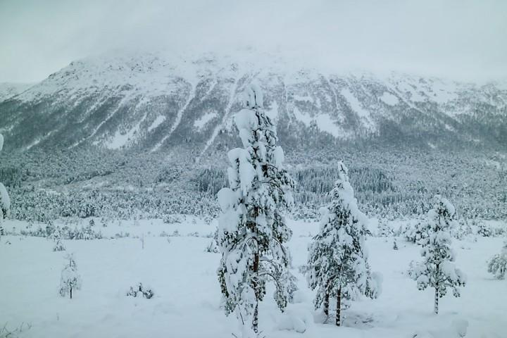 En halv meter bunnløs nysnø og tunge trær på søndagen.