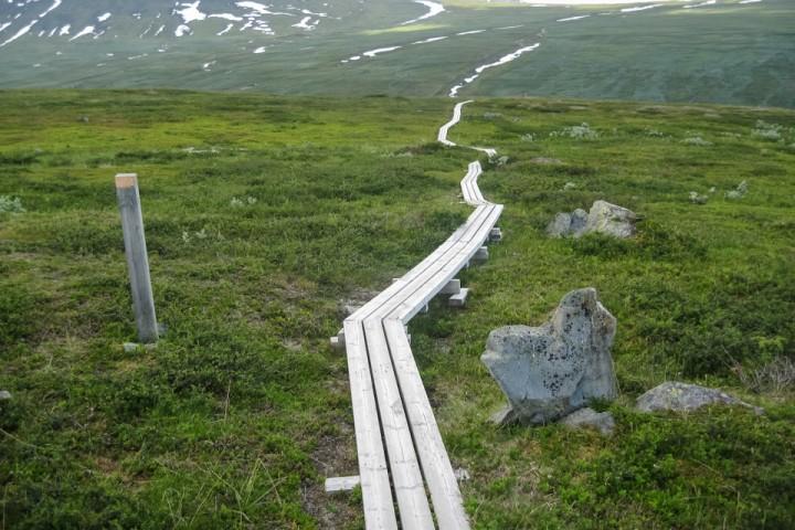 Kilometer på kilometer med plankestier.