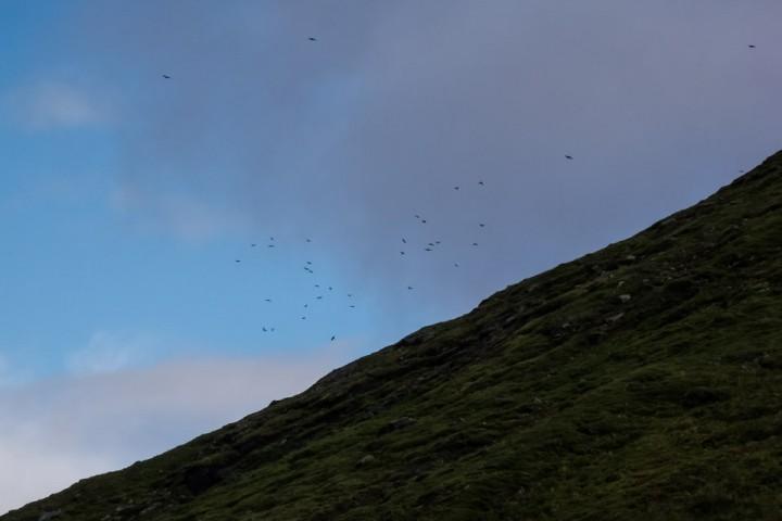 Fuglene viser vei til et ferskt kadaver.