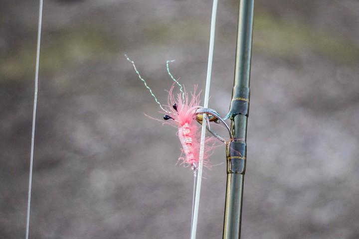 Denne rosa rekelignende sjøørretfluen fikk æren av å starte årets første fisketur.