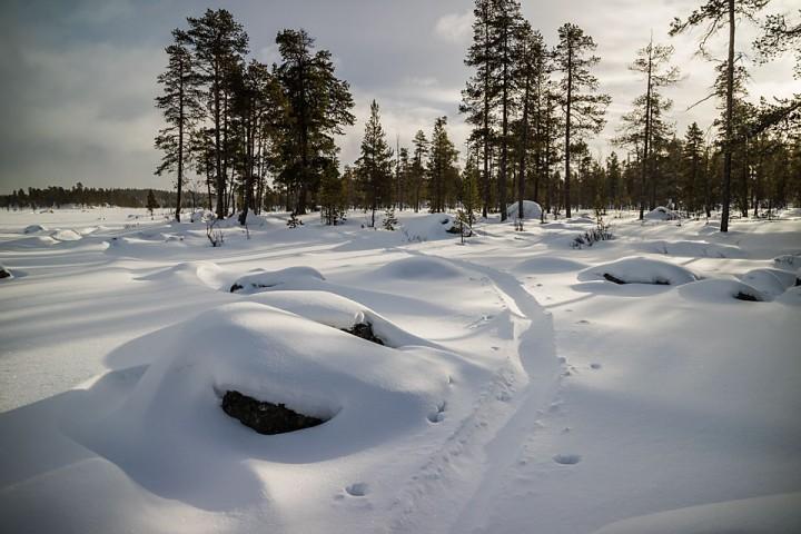 Vinter i skogen.