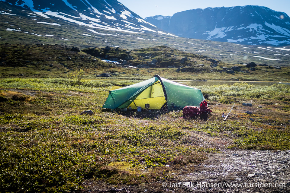 Fjærmyggen trivdes i teltskyggen.