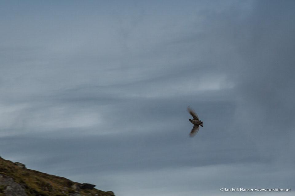 Med blender 8 og grå skyer ble rypa litt for rask for kameraet...