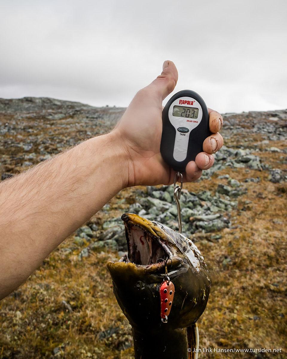 Endelig. Etter måneder på jakt etter storrøya er målet om røye på over to kilo i boks.