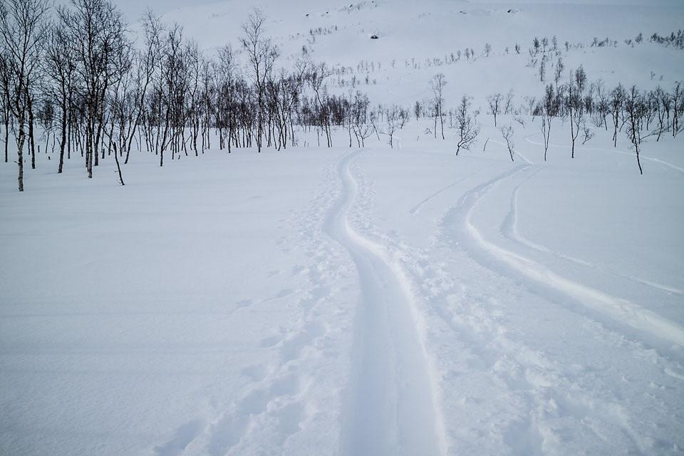 Passe mykt. Passe dypt. Passe glissen skog. Verdt noen ekstra turer.
