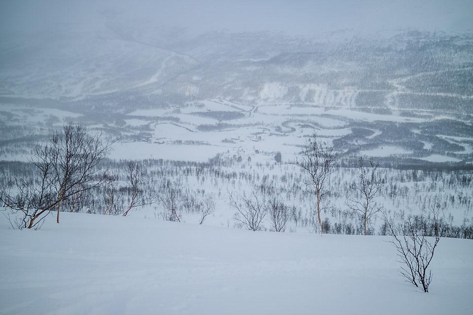 Heldigvis mye glissen skog i Tamokdalen når det ikke er forhold i høyden.