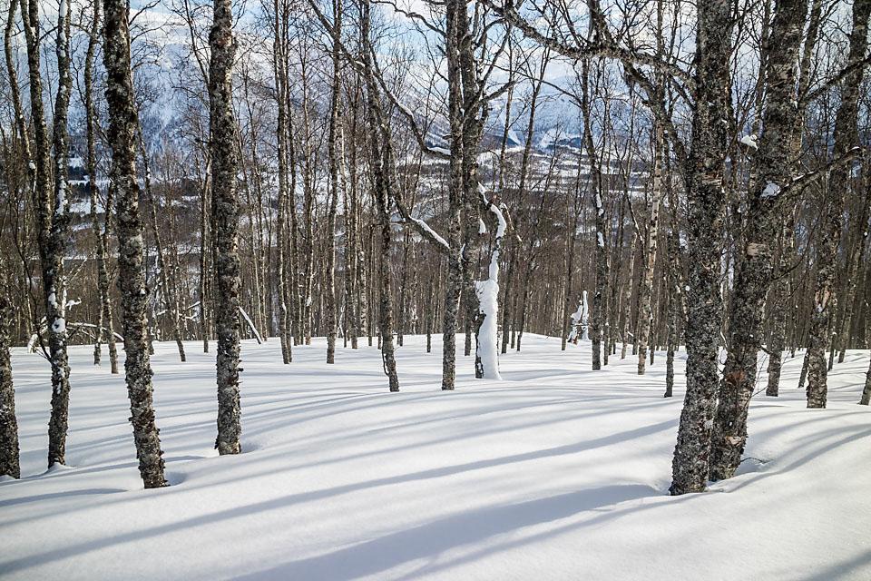 Tett skog i starten